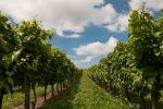 Best Travel Destinations for the Wine Lovers